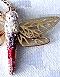 swarowski_dragonfly-pedant-sk