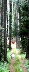 polku-sm_2010-09-05-sk